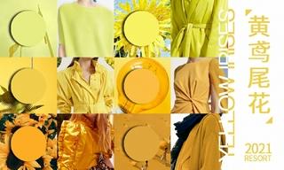 2021春游色彩:黄鸢尾花